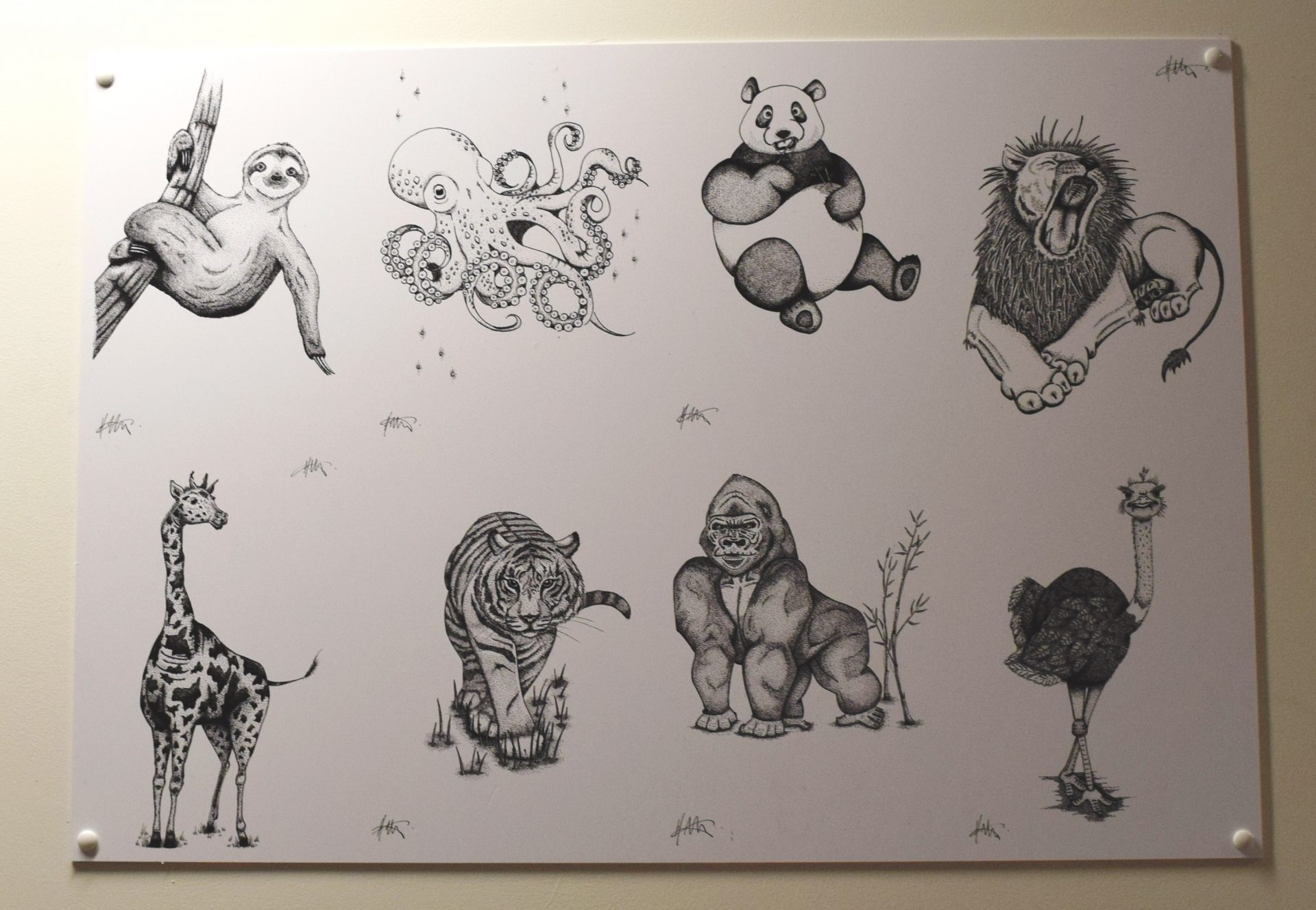 Wildlife drawings by Holly Metcalf on display in x-ray at the Northumbria Hospital