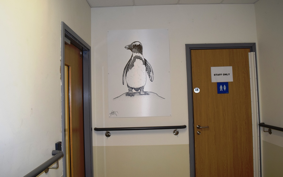 Wildlife drawings by Holly Metcalf on display at the Northumbria Hospital
